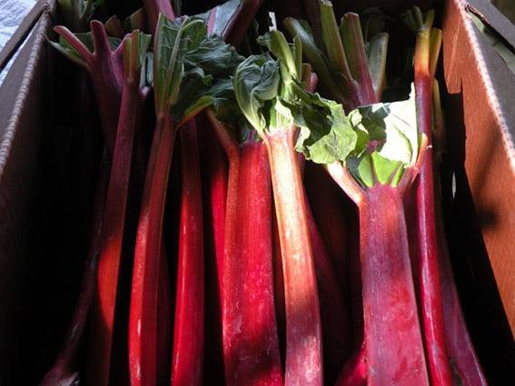 confiture de rhubarbe avec thermomix